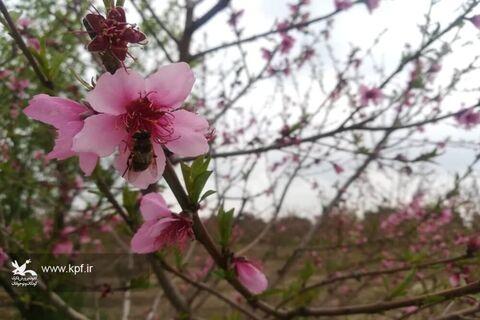 ابوالفضل معدنی عضو نوجوان مرکز فرهنگی هنری شماره دو کانون سمنان