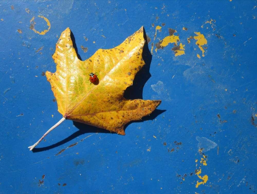 چهارمین مهرواره فصلی عکس کانون، برگزیدگان خود را شناخت