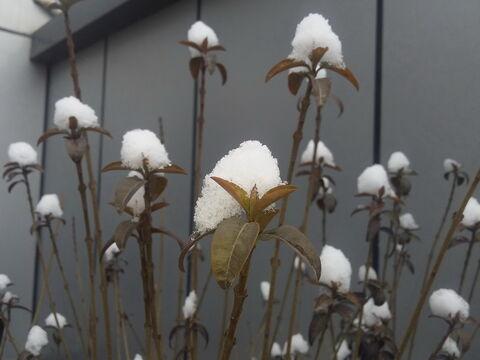 راضیه احمدوند از همدان برگزیده پنجمین مهرواره عکس فصلِ زمستان کانون