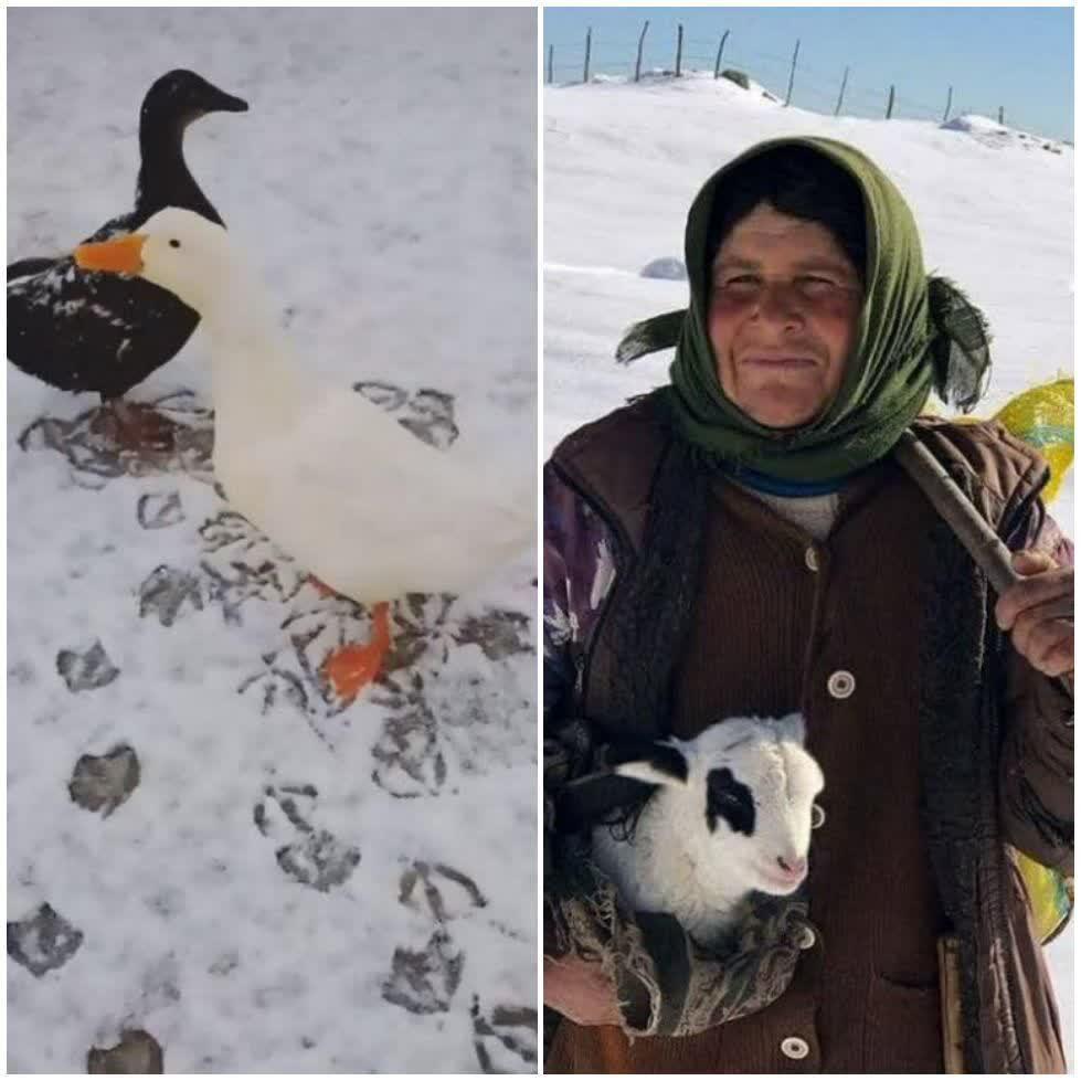 شش عنوان برگزیده و تقدیری مهرواره فصلی عکس کانون به آذربایجان غربی رسید