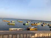برگزیدگان مهرواره منطقهای عکس «خلیج فارس، قلب آبی ایران»